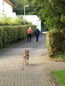 dog following two people on a path