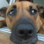 Dog Mocha close-up