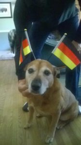 dog with german flags on her head
