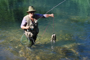 woman flyfishing with two trout